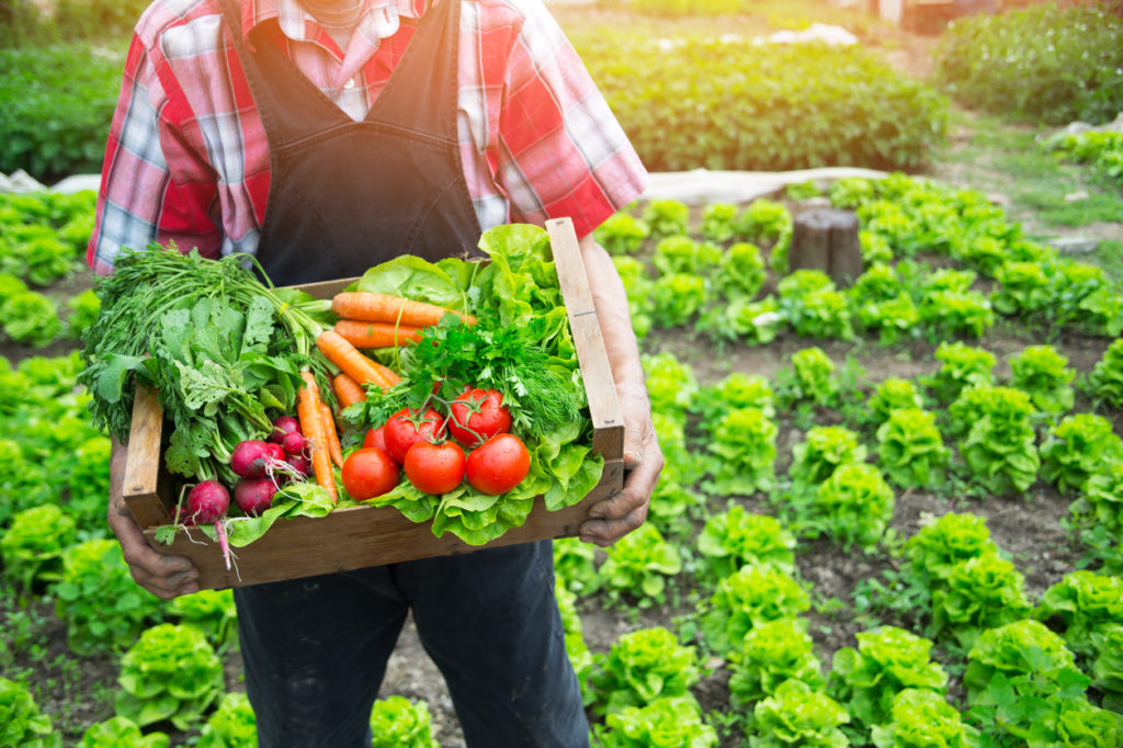 How To Find A Local Organic Farm Near You 5thbranch